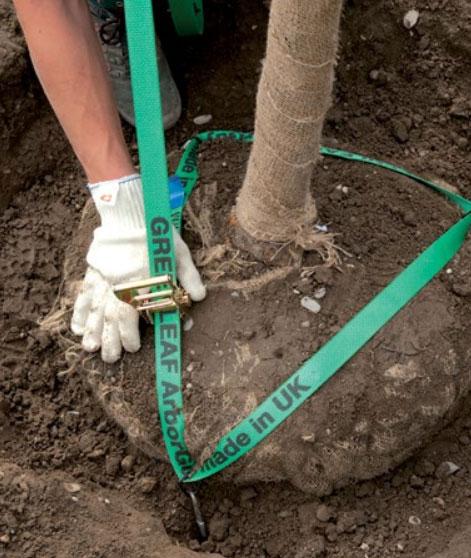Sustavi za podzemno sidrenje učvršćivanje stabla