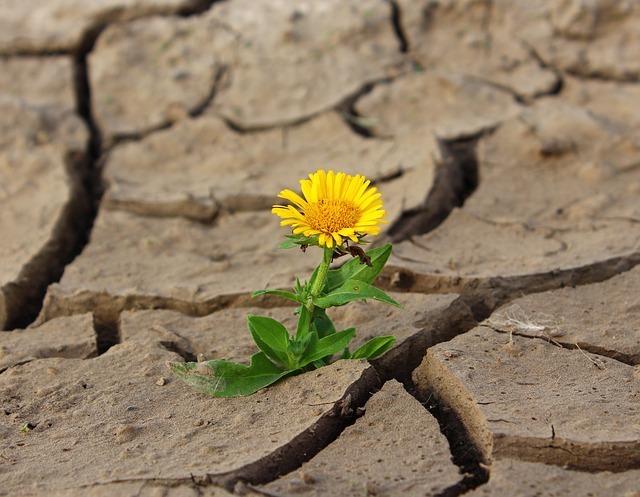 Vegetacija u sušnim uvijetima